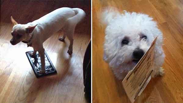 Чем отмыть собаку от клея