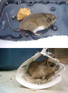 Как отмыть клей от мышей