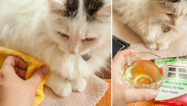 Как отмыть кошку от клея