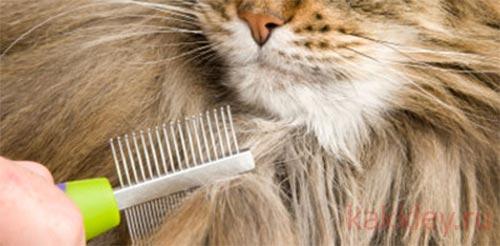 Как безопасно удалить клей с шерсти кошки или собаки